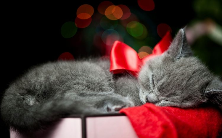 Kitty Bow Sleep